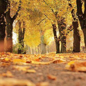 retraite : promenades sauvages et yoga (automne)